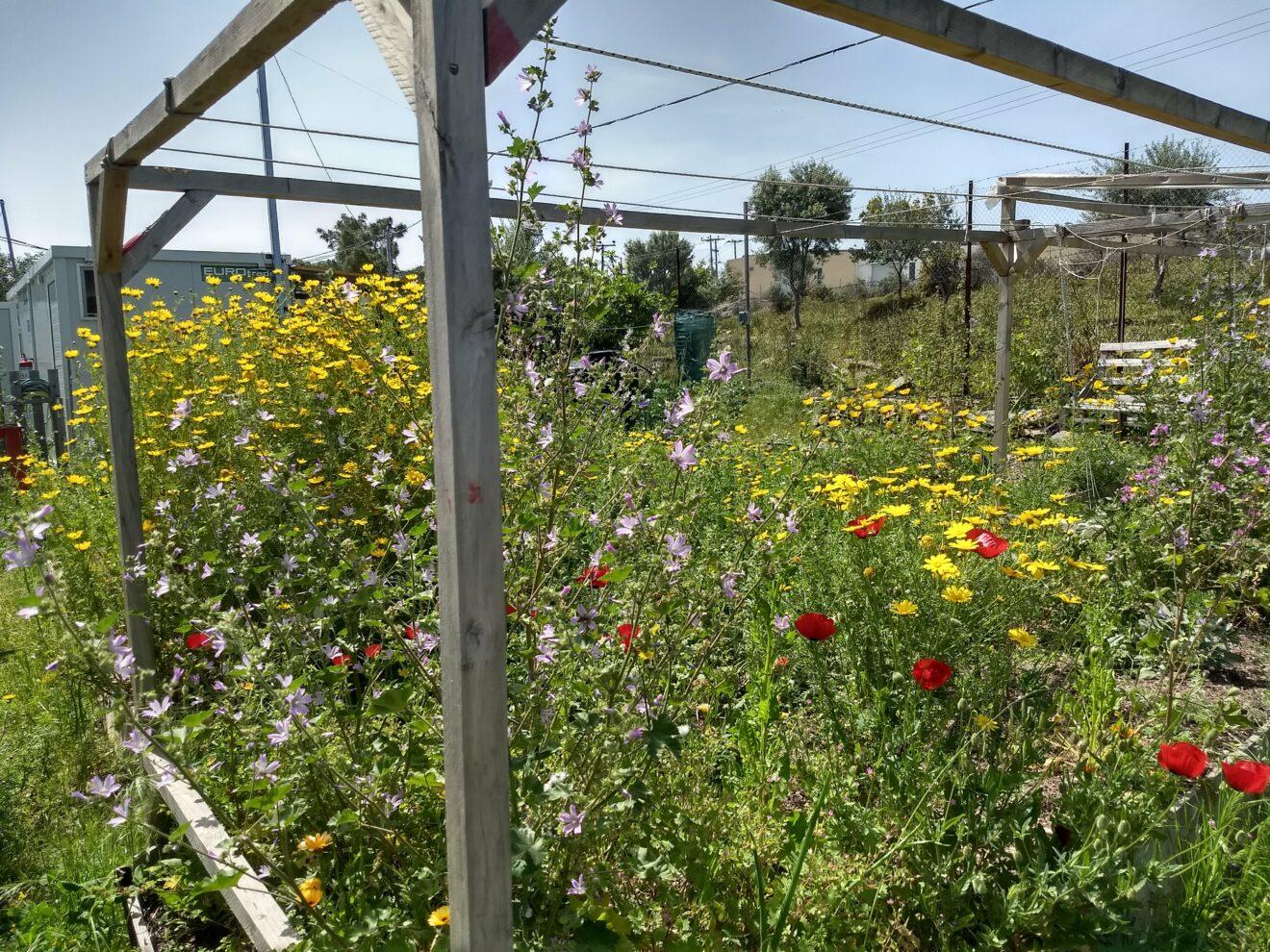 Der Garten vom OHF blüht!